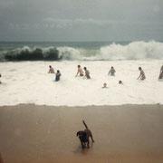 1985 - Ce petit chien va mourrir pendant la nuit, il s'était amusé à attraper au vol le sable que les enfants lui envoyer.
