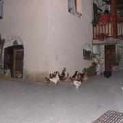 2005 - Les poules de Claudie