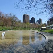 """Boston Common, """"le lac des grenouilles"""",  l'hiver c'est une patinoire"""