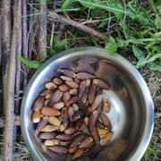Arqueología Experimental. Pan de bellotas y trigo