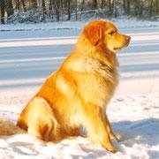 Eros - ein sehr typvoller Rüde, der auch als Deckrüde eingesetzt wurde. Er war einer der ersten Hovawarte, der als Therapiehund eingesetzt wurde. Mehrfach war er auch bei seinen Einsätzen im MDR zu sehen.