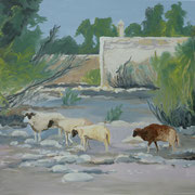 Les moutons de Ghazoua