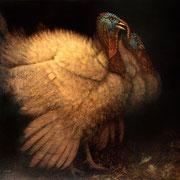 dindon- acrylique sur bois - 60x63 cm - 2007 - M.Pavlïn