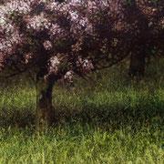 Pommier - détail - M.Pavlïn