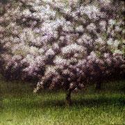 Pommier - acrylique sur bois - 45x45 cm - 2005 - M.Pavlïn