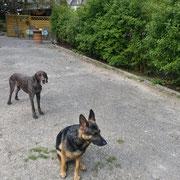 ...mit meinen Hunden