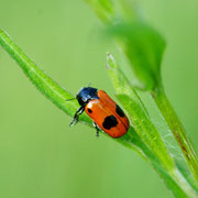 Le monde des insectes