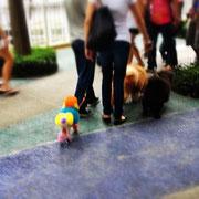 Colored Dog