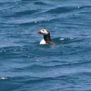 réserve ornithologique des sept îles