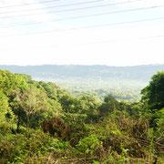 Pures Dschungel-Feeling