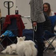 Aiko und Frauchen hochkonzentriert im Ring