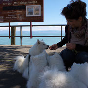 die Hundefamilie am See