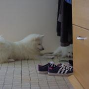 Suki findet Mamas Schlafplatz super!