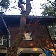 「ツリークライミング2」木を切るついでに少し遊ぶ