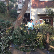 「ツリークライミング1」友人の家の木を切る手伝い