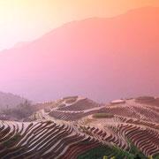Reisterrasse in Südchina
