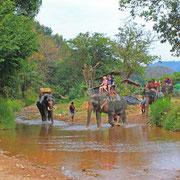 Elefanten-Trekking durch den Nationalpark.