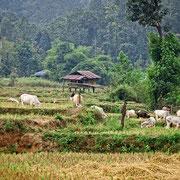 Typisches Landschaftsbild in Mae Sariang
