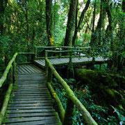 Trekking-Touren durch den Dschungel.