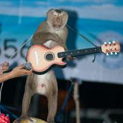 Ein Affe der Gitarre spielt?!