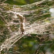 Typische Spinne welche man während den Trekking-Touren beobachten kann. Nicht giftig.