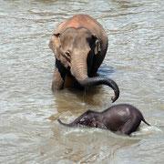 Elefanten lieben es zu baden. Auch mit Ihnen! :))