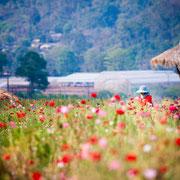 Frauenreise Thailand