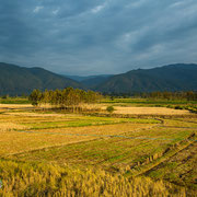 Flora und Fauna im Doi Phu Kha Nationalpark