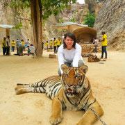 Touristen-Fotos mit den Tigern - 1.000 Baht!