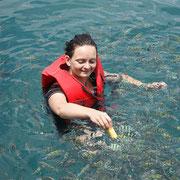 Fische füttern bei einem Schnorchelausflug nach Koh Talu.