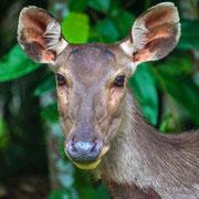Neugierige Tierwelt im Khao Yai