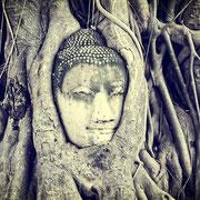 Banyan-Baum mit dem eingewachsenen steinernen Buddha-Kopf.