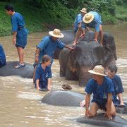 Touristen baden zusammen mit Elefanten im Fluss.