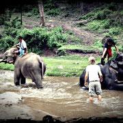 Elefantenbaden in Mae Tang