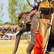Tour zum Elefanten-Fest in Surin