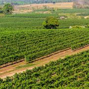 Weinanbaugebiet in Khao Yai (Nakhon Ratchasima)