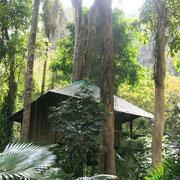 Schlafen Sie mitten im Dschungel.