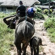 Rundreisen im Norden von Thailand.