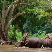 Elefanten in Sangkhla Buri