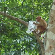 """Vorsicht! Die frechen Affen klauen alles was nicht """"niet- und nagelfest"""" ist."""