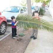 これはここだけでなくバルセロナだって時々落ちている椰子の木の葉っぱ。  「ねえねえ、これバルセロナに持って帰ろうよ~」とかなりしつこくせがまれました。