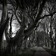 Dark Hedges, Ballymoney, Nordirland