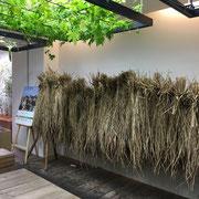 刈り取った稲の展示