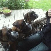 Toni, Nick und Dolce...erste Boxererfahrungen