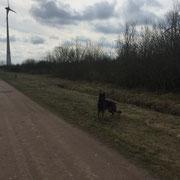 Wandeling windmolens