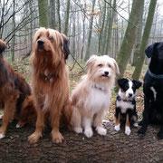Carlsson, Emil, Malou, Tatü  Luna