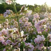 Цветет не скошенная трава