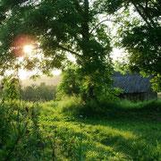 Солнечный свет на клявишской траве