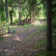 Лес возле Клявишек