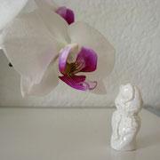 der Orchideen-Liebhaber